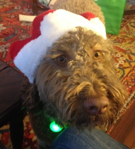 You know I deserve a treat for wearing the Santa hat!